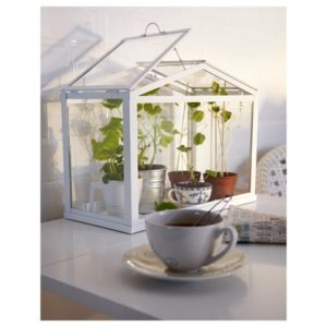 Grow Your Own Herbs at Home with a Mini Greenhouse