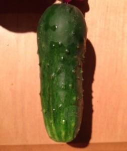 first cucumber