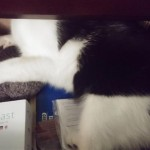The Cat Files: Disappearing in the Dresser