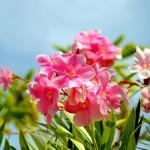 Flower Gardening Tips