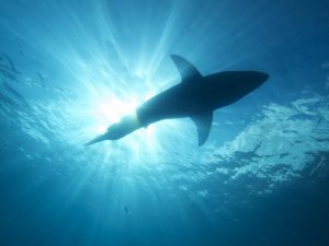 Summer Shark Safety – Beach Tips