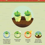 How to Regrow Food from Scraps