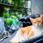 4 Easy Ways to Create an Outdoor Cat Shelter