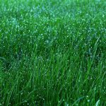 Five Basic Steps to a Lush, Green, Weed-Free Lawn