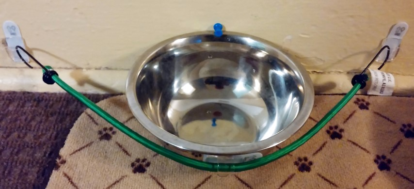 Cat Knocking Over Water Bowl