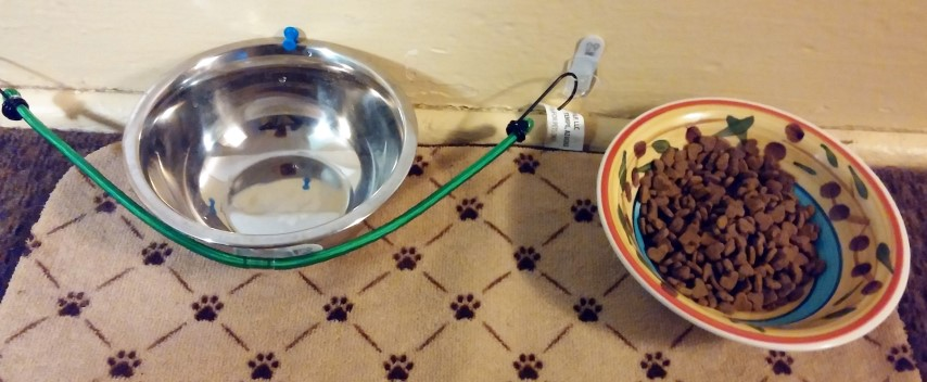Pet Knocking Over Water Bowls Solution
