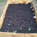 Organic Raised Garden Box: How I Did It