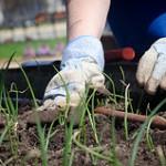 4 Amazing Benefits of Vegetable Gardening