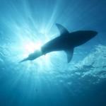 Summer Shark Safety – Beach Tips