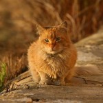 Why Stray and Feral Cats are Beneficial to Your Neighborhood