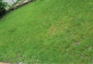 The Best Way to Get Rid of Yard Weeds in Grass