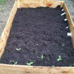 Organic Raised Garden Box: How I Did It